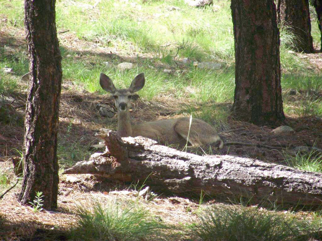 Deer relaxing on a summer day