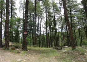 Acreage In Tall Pines & Boulders